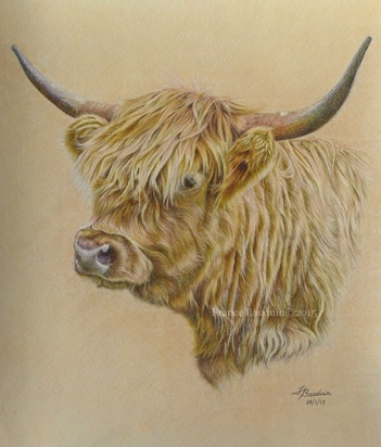 "Highland Cow head - 34 hours Sand Pastelmat Board 16"" x 19"""